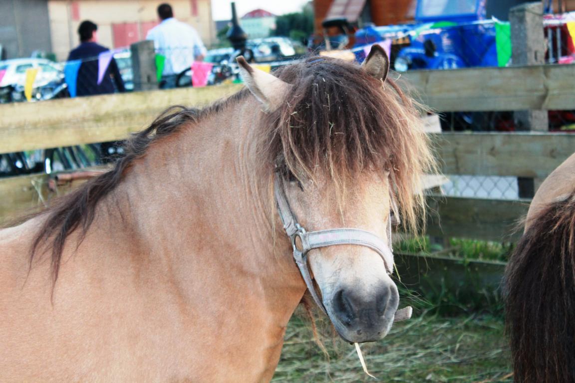 K1024_Fleur der Star unter den Ponys